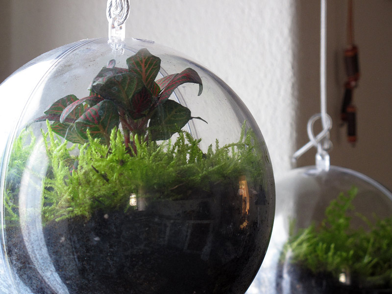 A garden inside a ball - Christmas time
