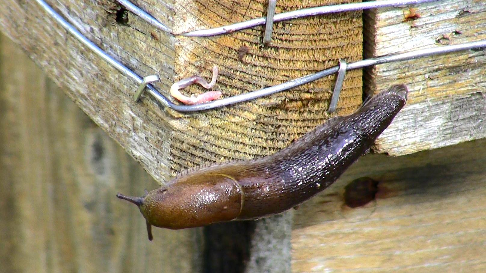 Electric Garden Slug Fence