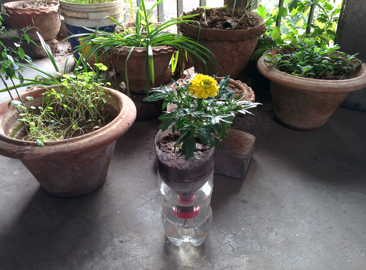 Recycled Bottle Self Watering Hydroponics