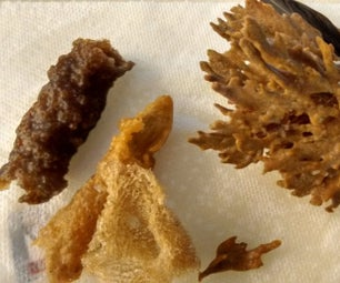 Sponging Up: Cleaning & Preserving Beachcombed Sponges