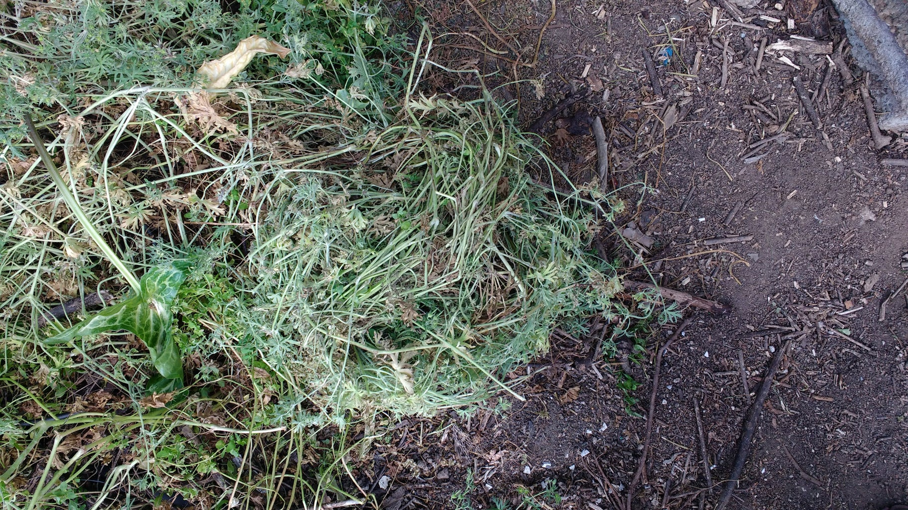 How to Compost Weeds (and NOT Compound Your Weed Problem)