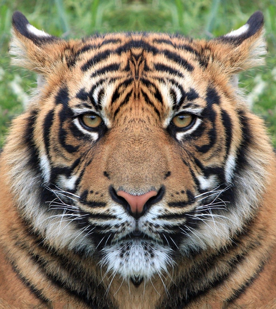 Transform Yourself Into an Animal in Photoshop!