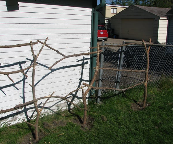 Trim a Tree, Build a Trellis