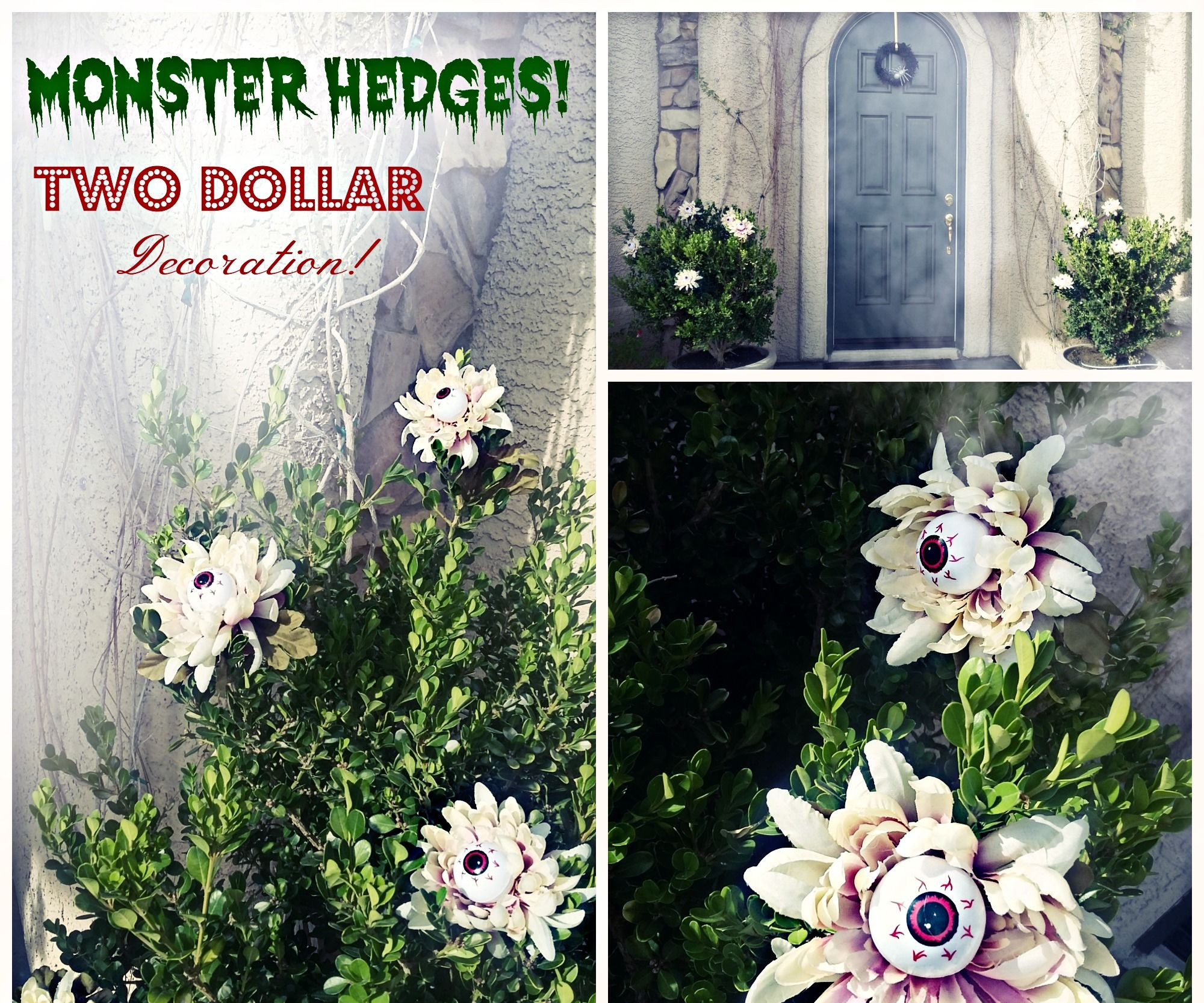 2 Dollar Monster Hedges!
