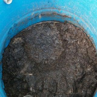 Making Liquid Fertilizer From Weeds