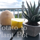 Potato to Plant Pot