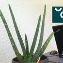 UCL - IIot - Smartplant