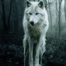 Frost_The_Wolf