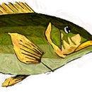 Fish Print T-Shirt or Banner
