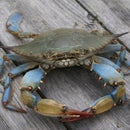 Crabbing For Beginners