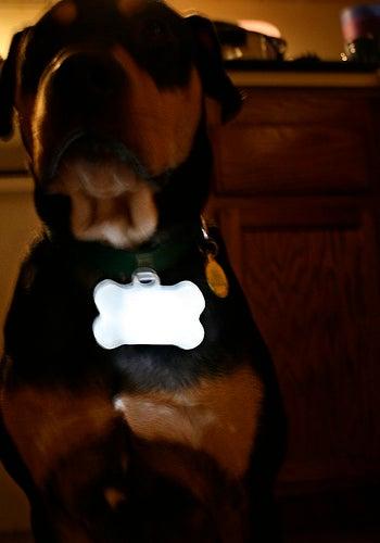 Glow Bone! LED Night Safety Dog Collar Doohickey