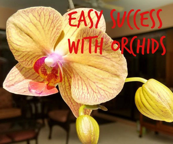 Easy Success With Orchids