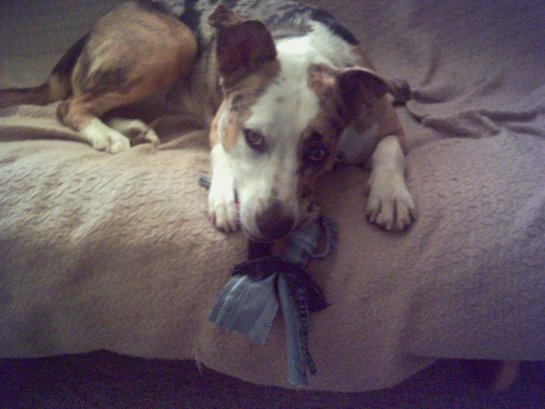 No-Sew Denim Dog Toy
