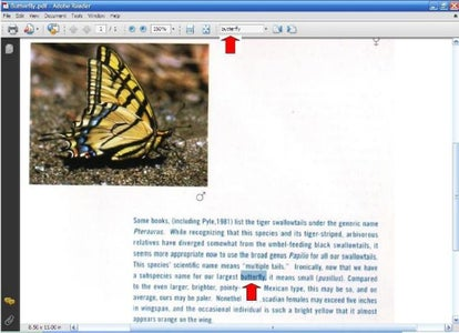 Convert Your Pdf Files Into Word-searchable Pdf Files