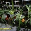 Jardinera reciclada de la envoltura de chips