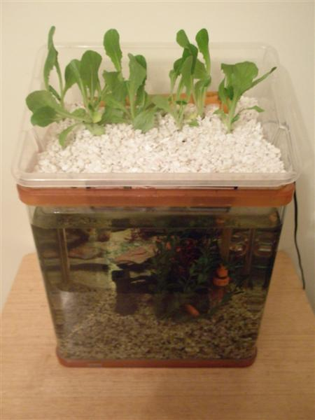 Small Aquaponic Unit
