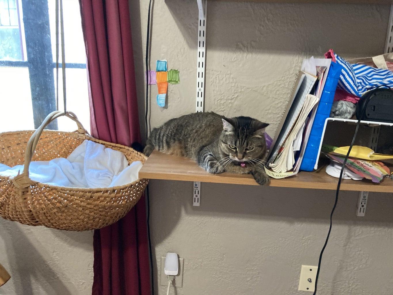 Your Cat's Escape Route