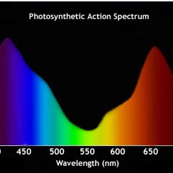 Light Spectrum and Plant Growth.png