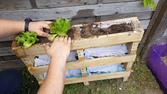 Planting Salads!
