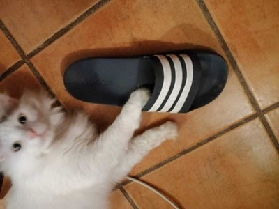 Giant Flip Flop - Cat Scratcher