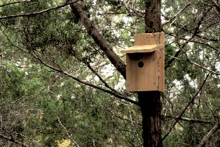 Inexpensive Bird House- Built at Techshop