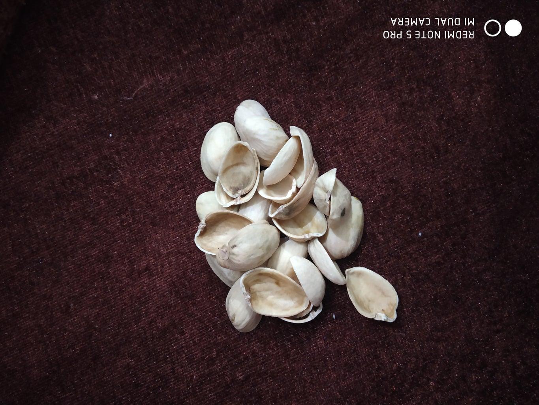Collecting Pistachio Shells