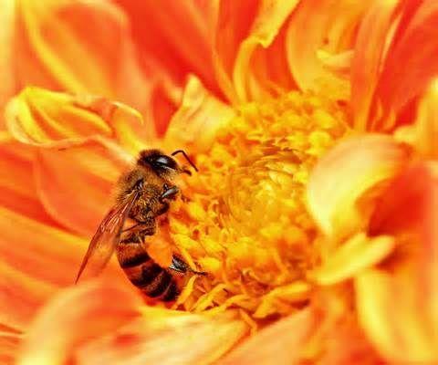 Propolis for You, Bee Antibotics