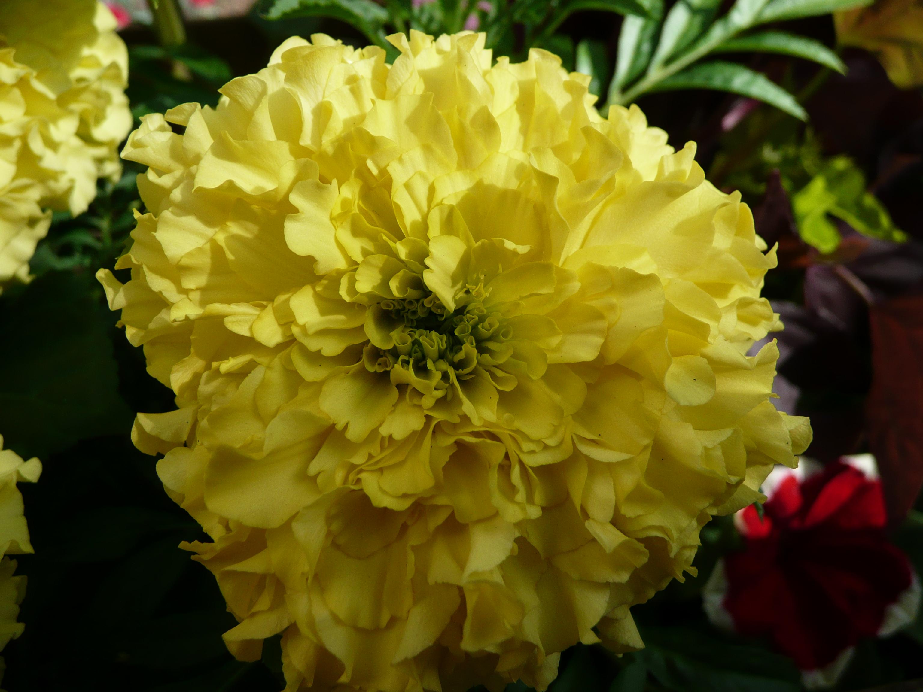 Taking Macro Photo's of flowers