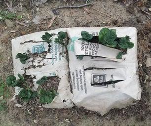 种植纸袋马铃薯