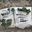 Growing Paper Bag Potatoes