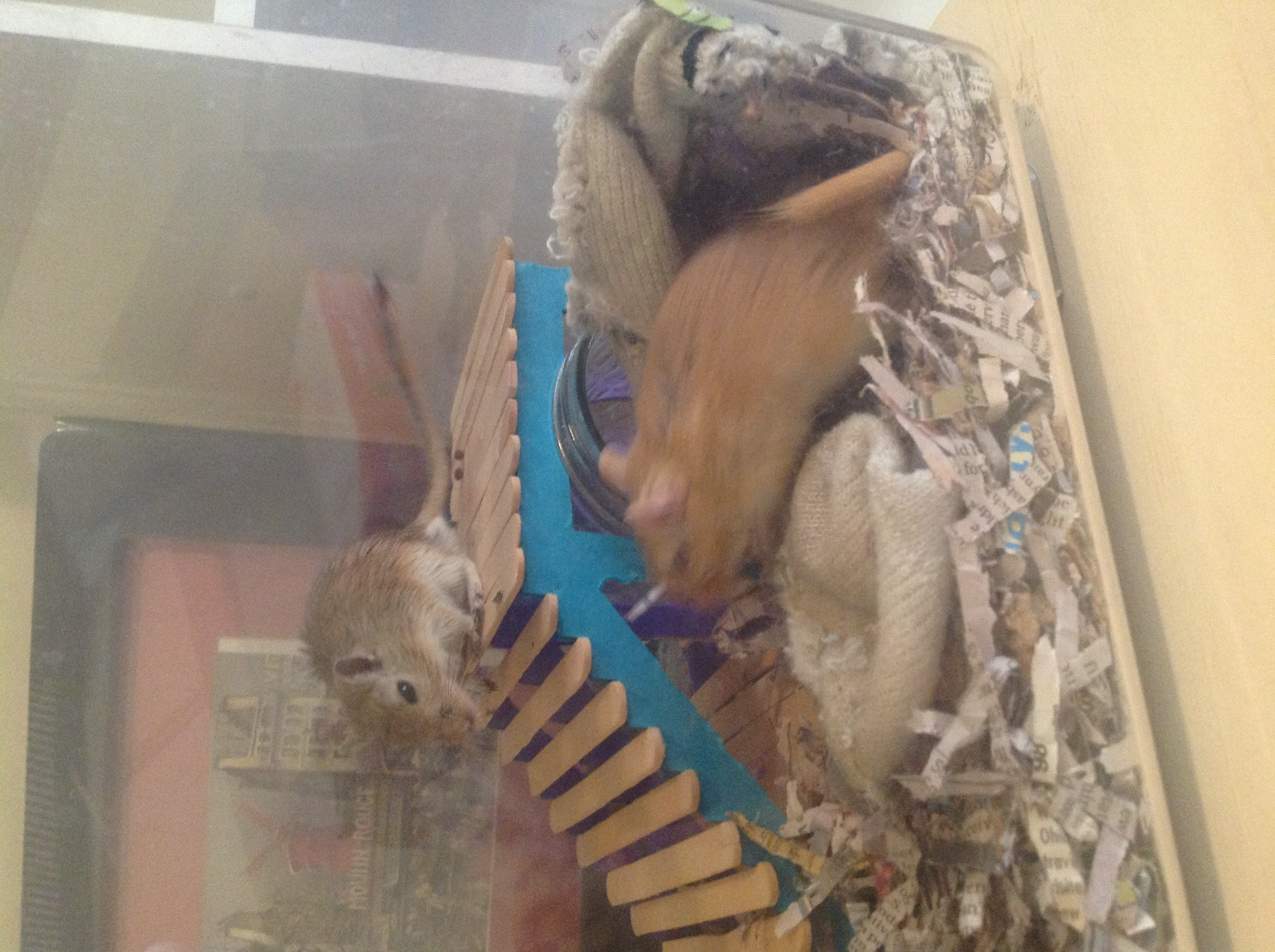 Gerbil Furniture - quick and easy