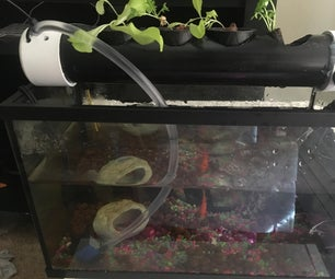 Aquaponics for 10 Gallon Fish Tank