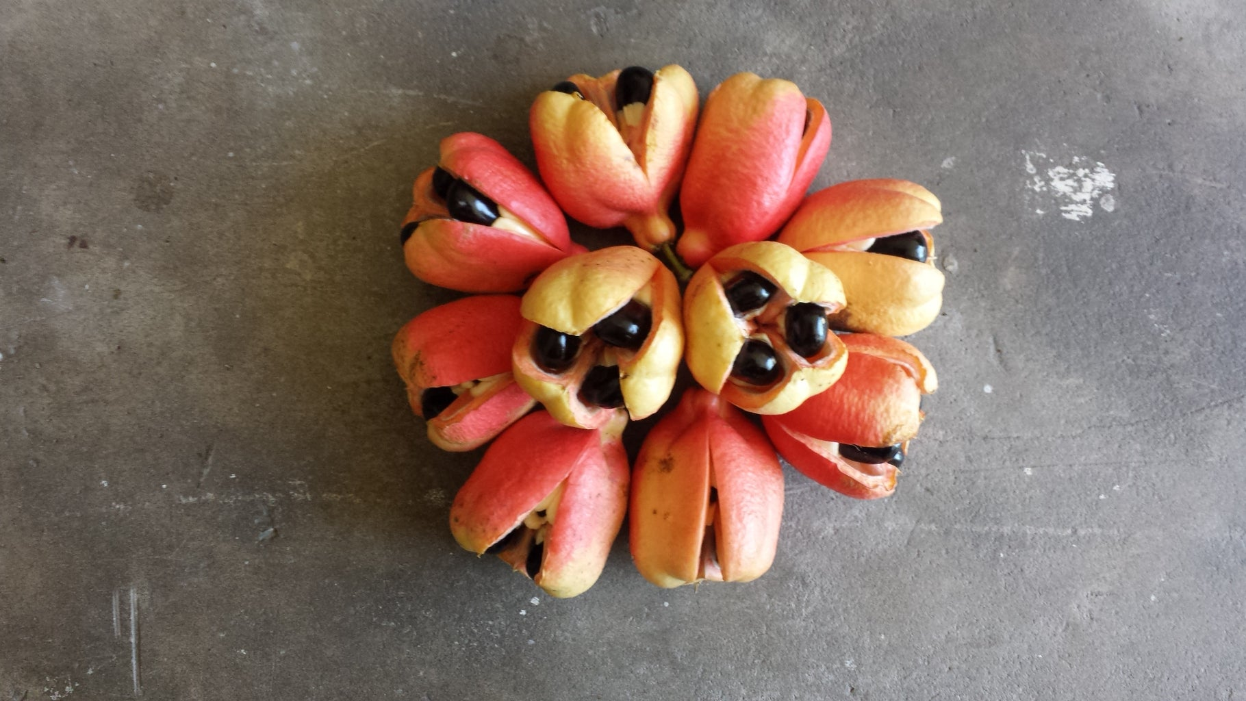 Removing Fruit