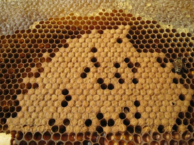Honey, Brood, Nectar or Pollen?