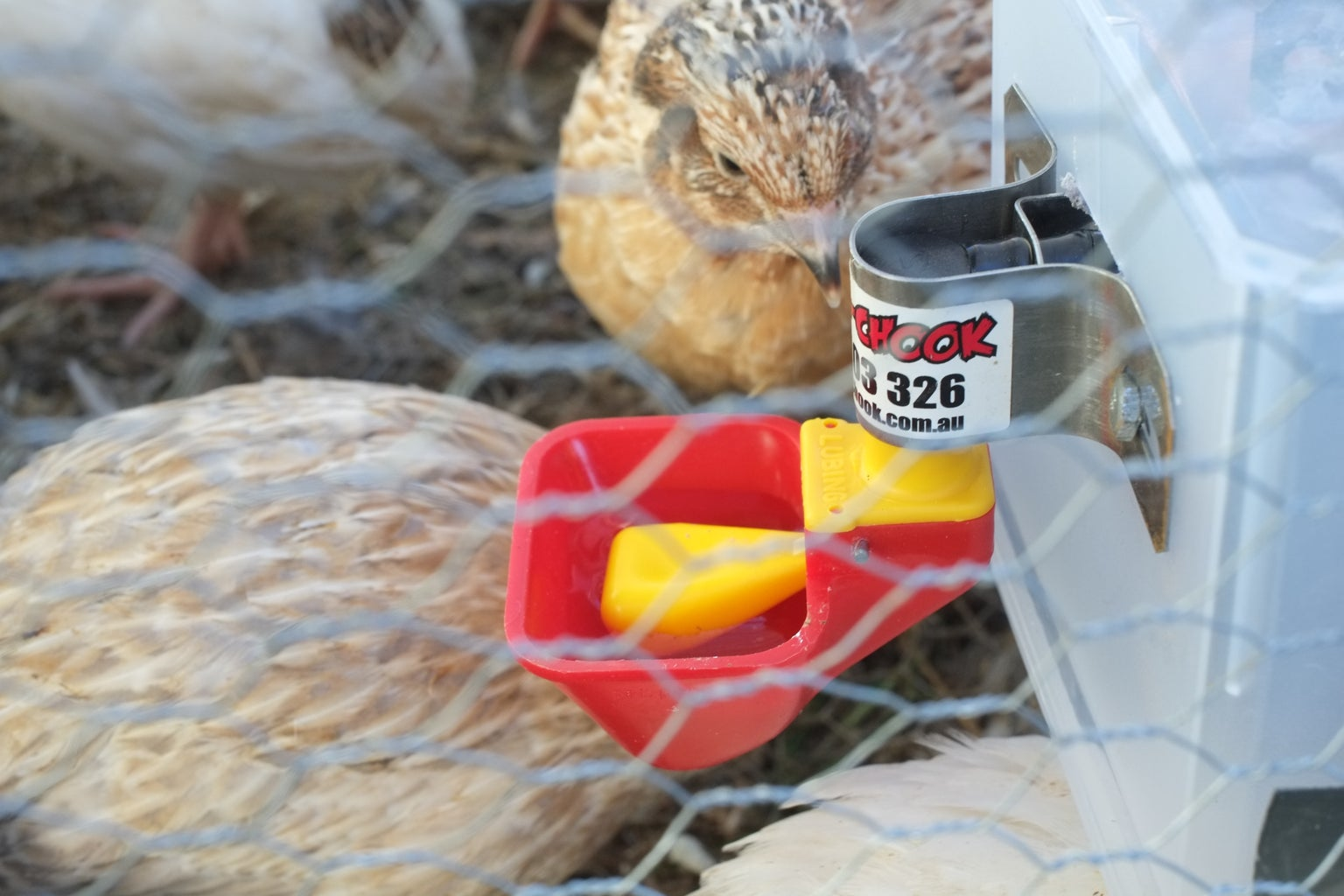 Quail or Chicken Drinker to Suit a Moving Tractor or Hutch
