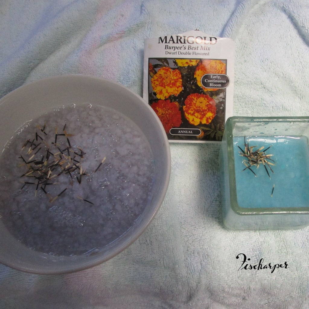 Add Seeds
