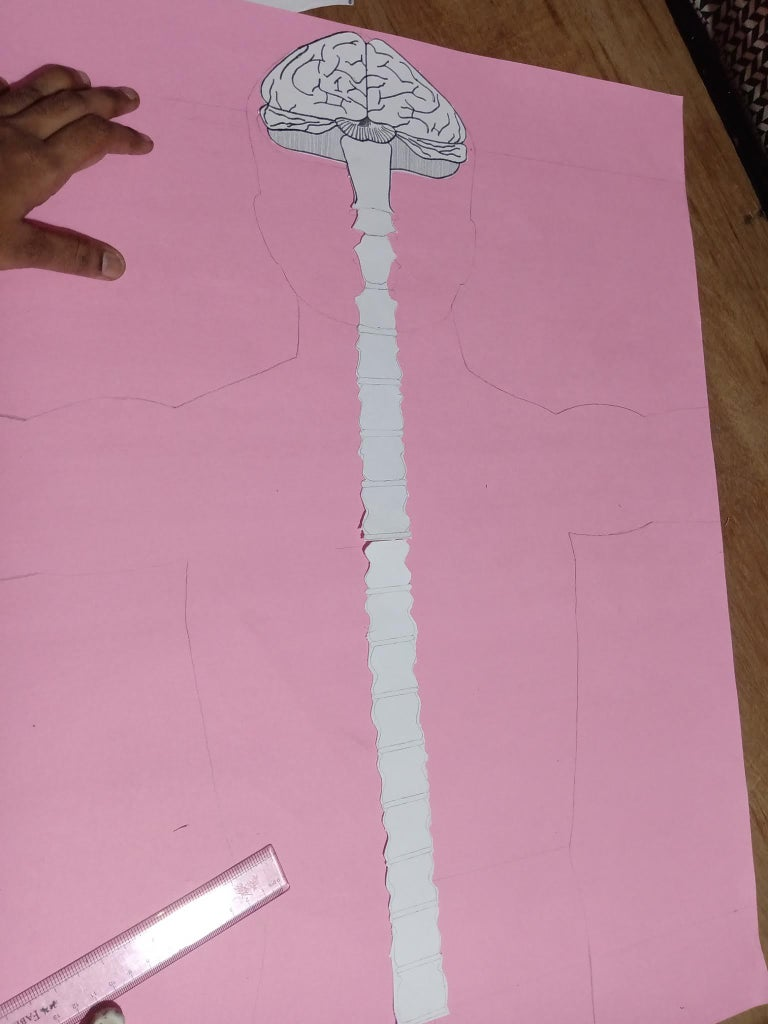 Layer 6 : Spinal Cord
