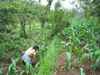 Purposes of Agroforestry