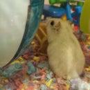 """Hamster """"Silent Mode"""""""