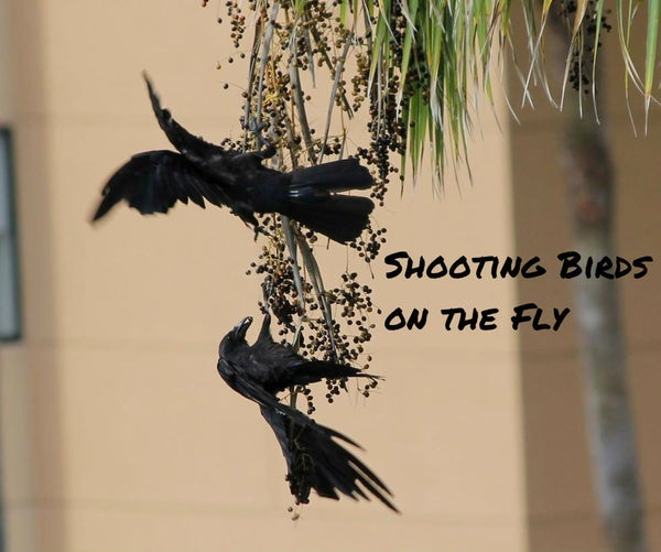 Shooting Birds on the Fly (with a Camera)
