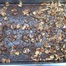Rollo Fudge Brownies