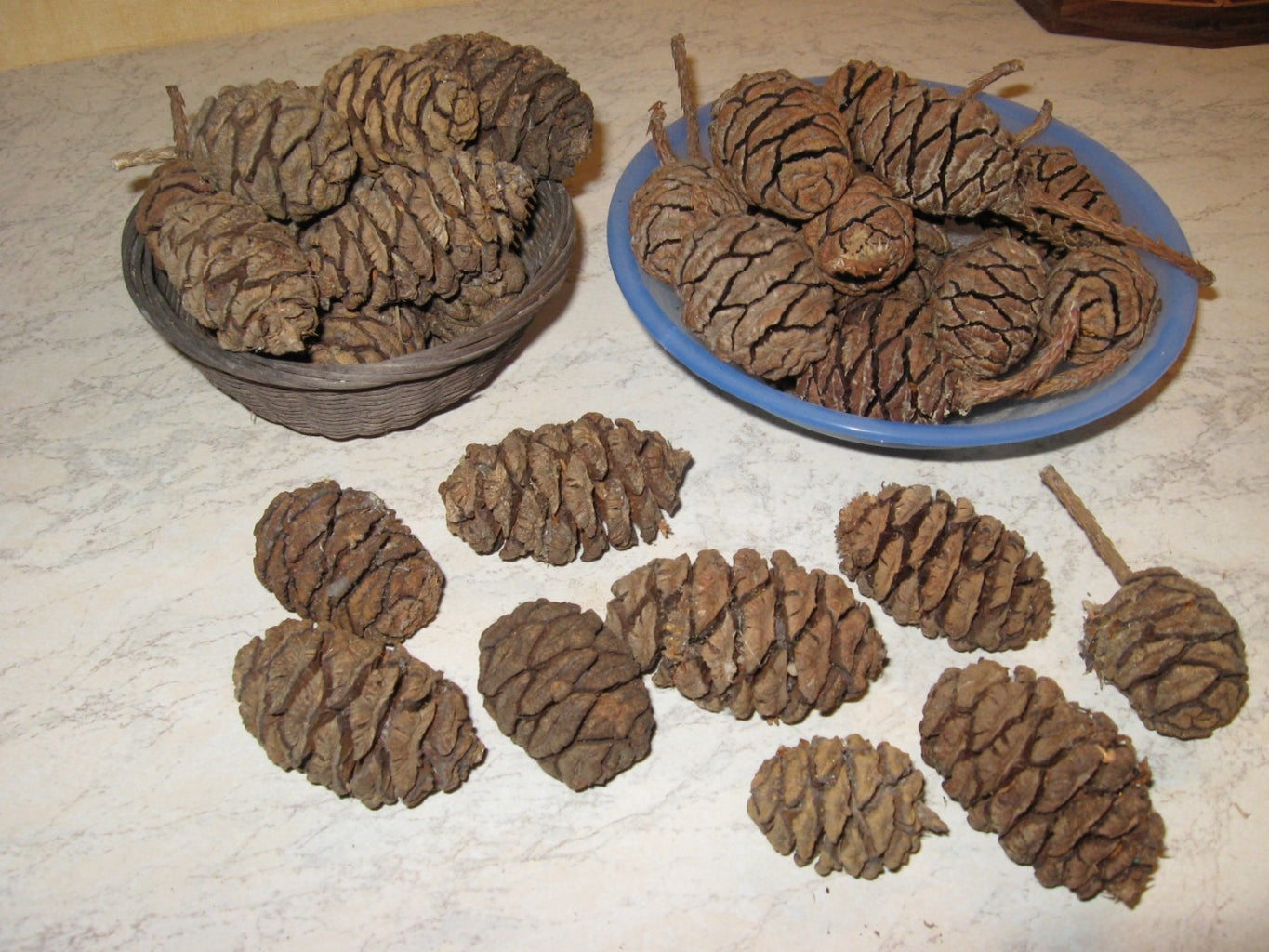 Get Some Giant Sequoia Seeds