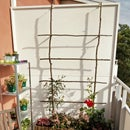 Balcony Trellis Without Harming Walls