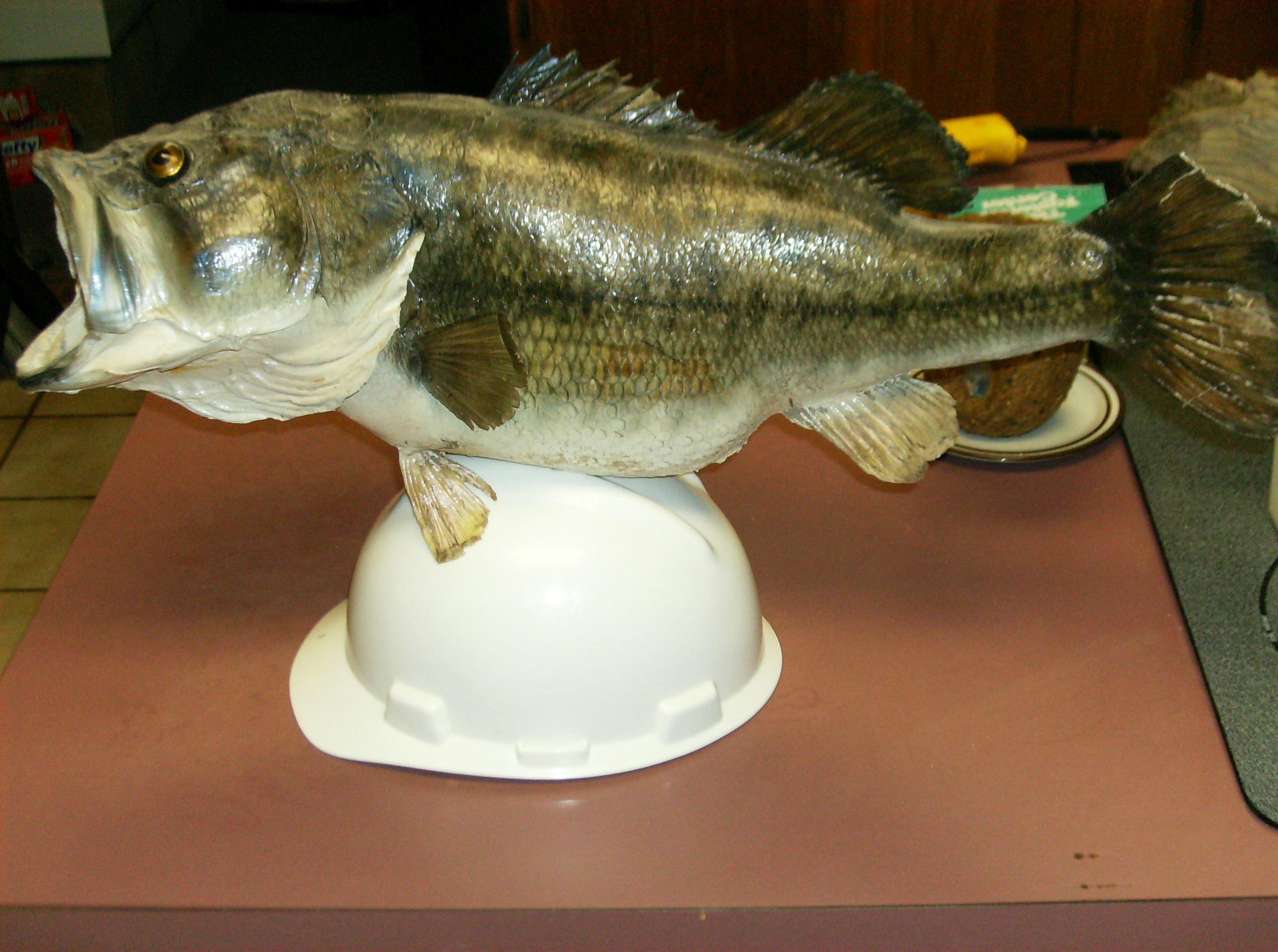 The Taxidermied Fish Helmet!