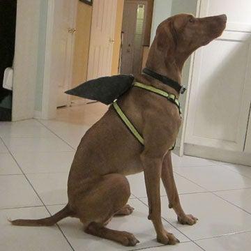 Shark Fin Dog Harness