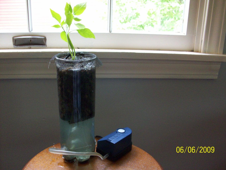 Single Plant Hydroponics (easy)