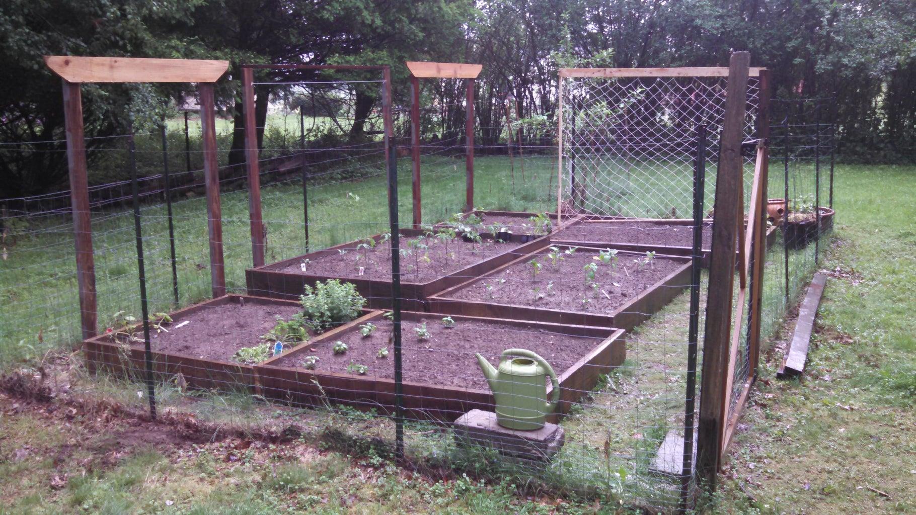 Vertical Gardening Trellis for Tomatos or Squash