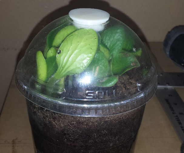 Espresso Mini Greenhouses