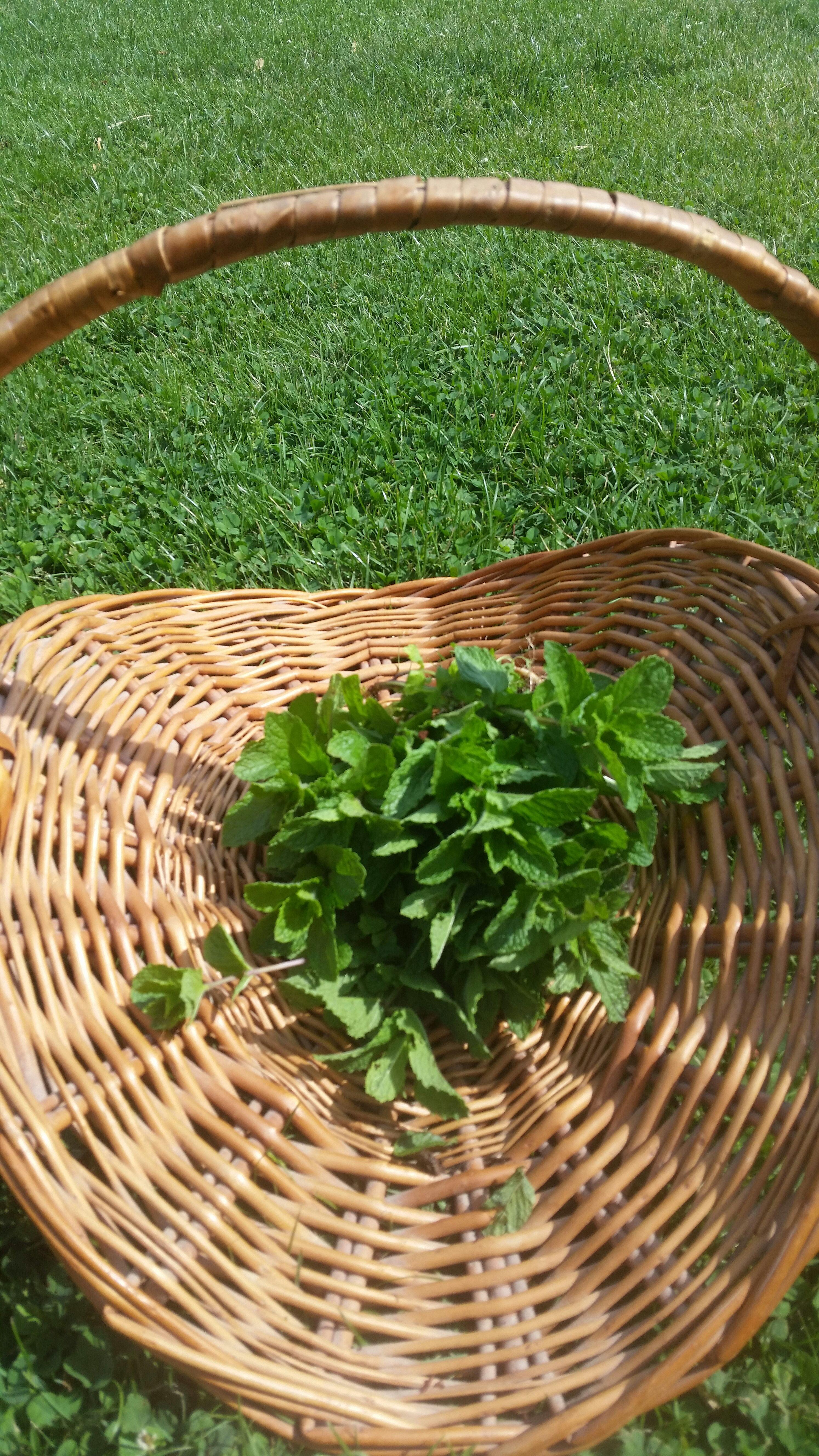 Homemade Herb Oils