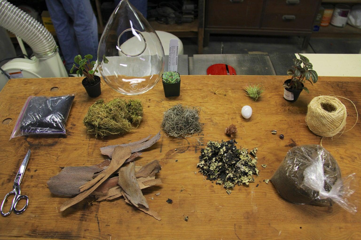 What You'll Need to Make a Terrarium